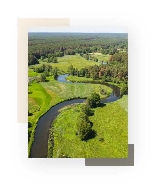 natura - bory tucholskie Łuczniczka
